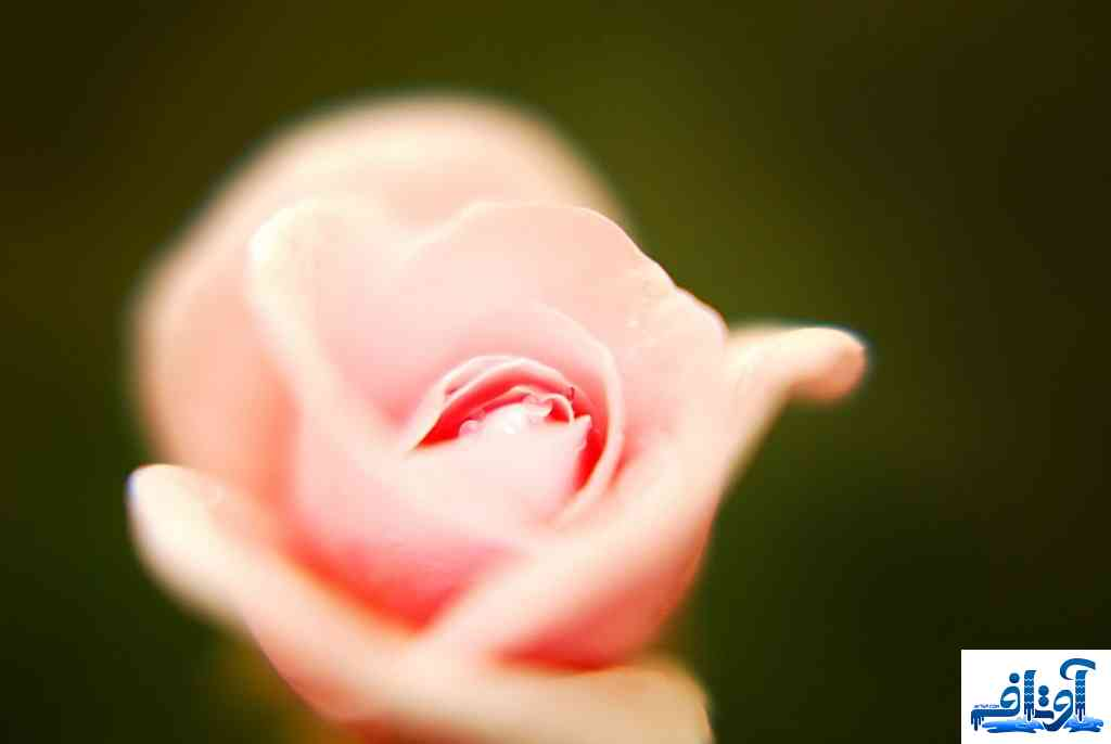 عکس پروفایل اینستاگرام رمانتیک, عکس پروفایل اینستاگرام عشقی, عکس پروفایل اینستاگرام, www.avtaf.com