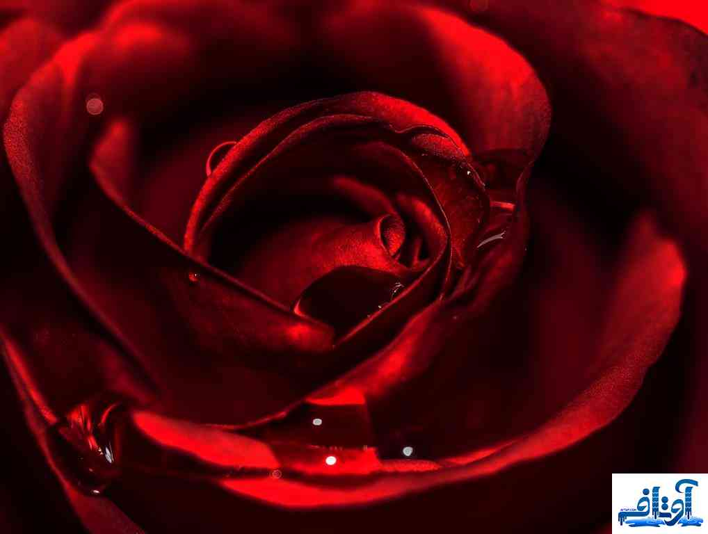 بکگراند عاشقانه با کیفیت,بکگراند عاشقانه برای سایت,بکگراند عاشقانه اچ دی, www.avtaf.com